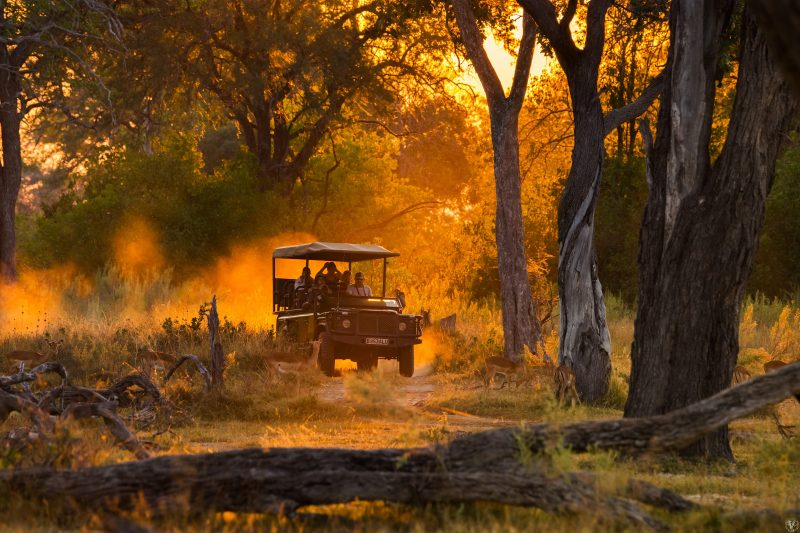 Sunset Game Drive Vehicle Moremi Shutterstock 344531177